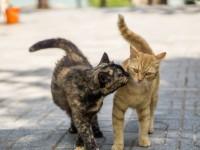 Сколько раз в год у кошек бывает течка
