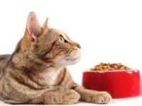 Чем кормить старую кошку?