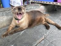 Что делать, если у кота сломался клык
