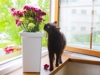 Почему кошка ест цветы?