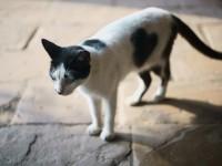 Почему у кота дергается спина?