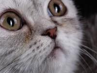 Что делать, если у кошки сухой нос