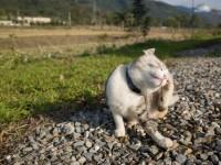 Почему у кота чешутся уши