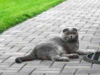 Причины кровяных выделений у кошки