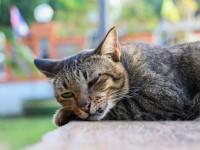 У кота течет слюна изо рта