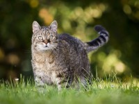 Почему трехцветные кошки приносят счастье?