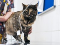Как кошке поставить капельницу подкожно?