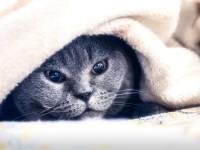Что делать, если у кошки вирусная лейкемия?