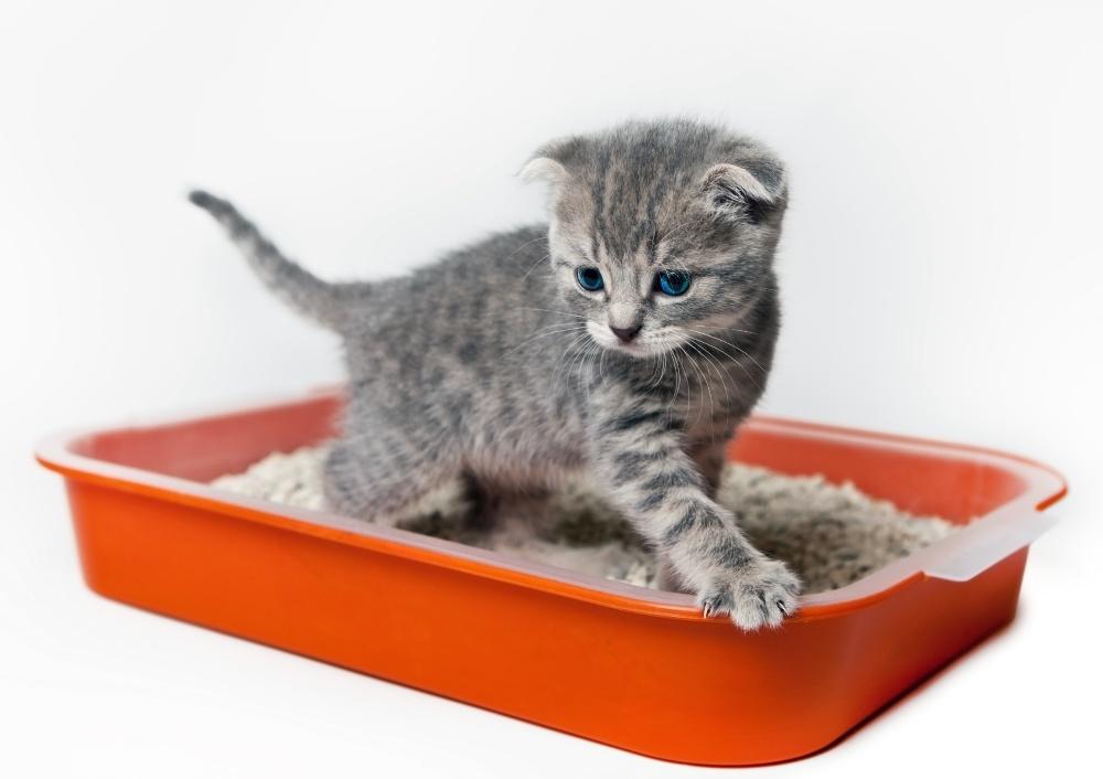 Что такое энурез у кота