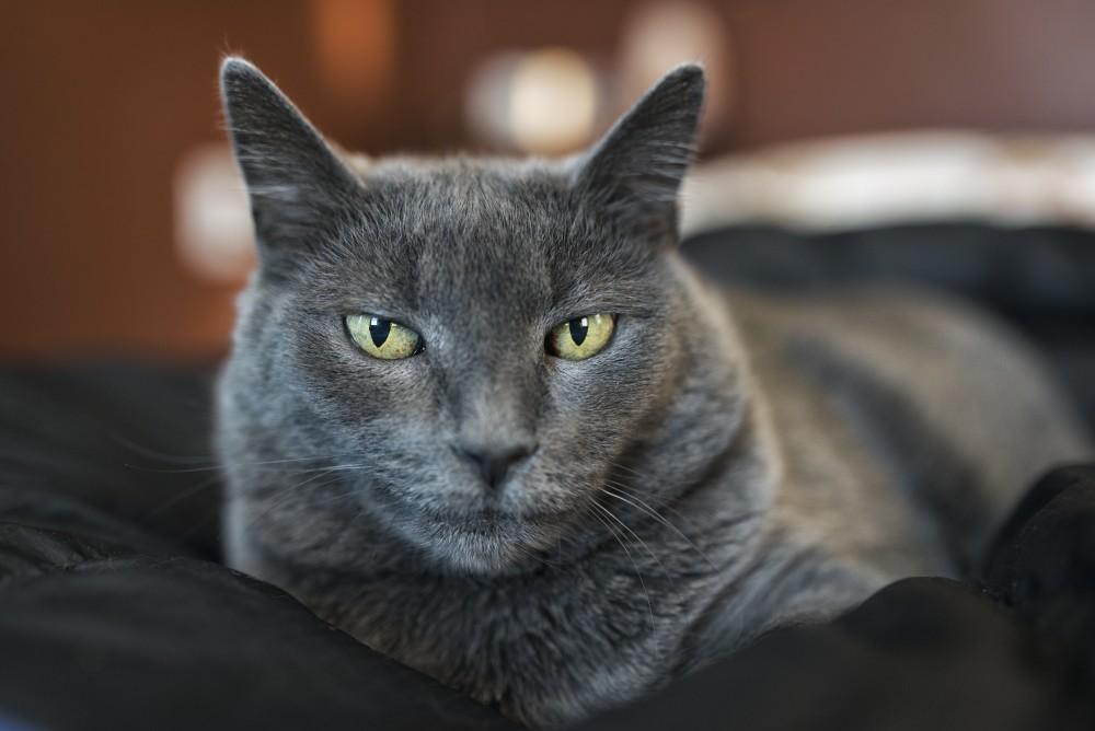 Британский кот когда начнет метить