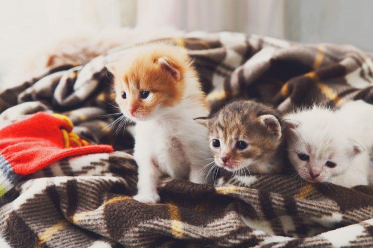 Успокоительное для кошек при стрессе и агресии