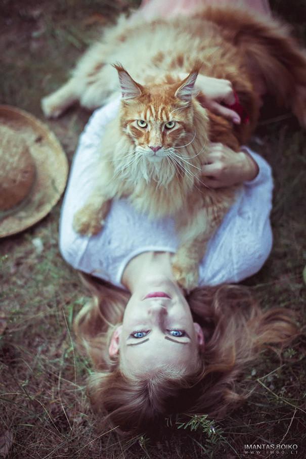 Порода кошек мейн-кун – дружелюбные гиганты. Описание и фото породы мейн-кун
