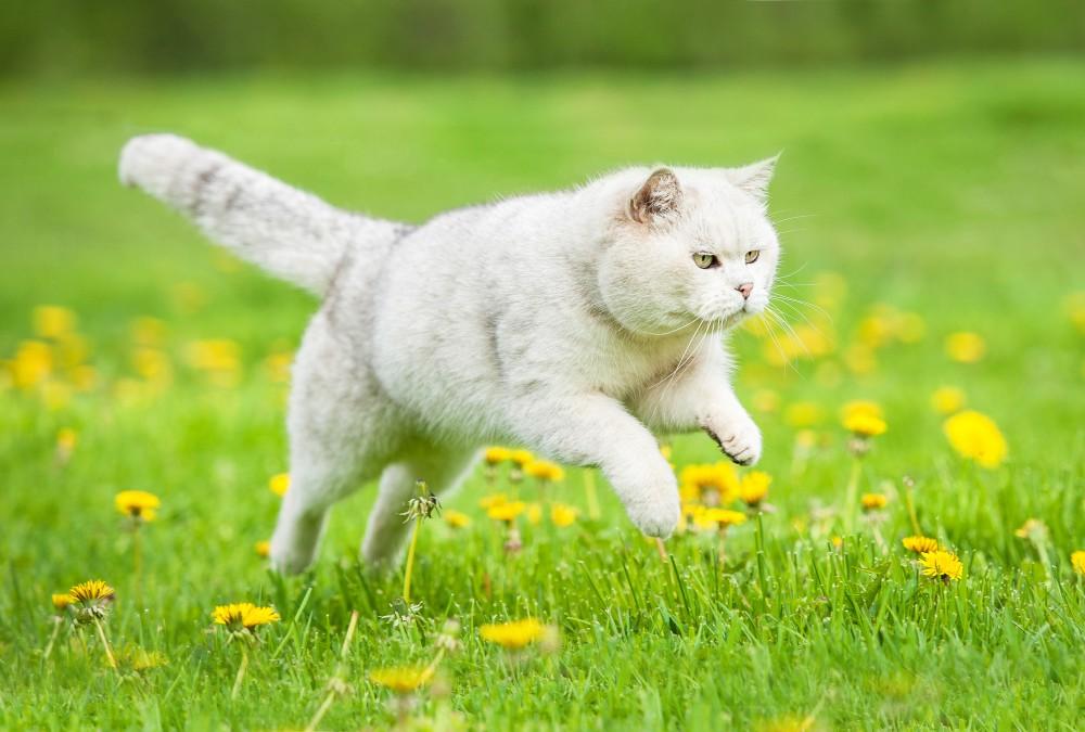 Что делать если кошка хочет кота
