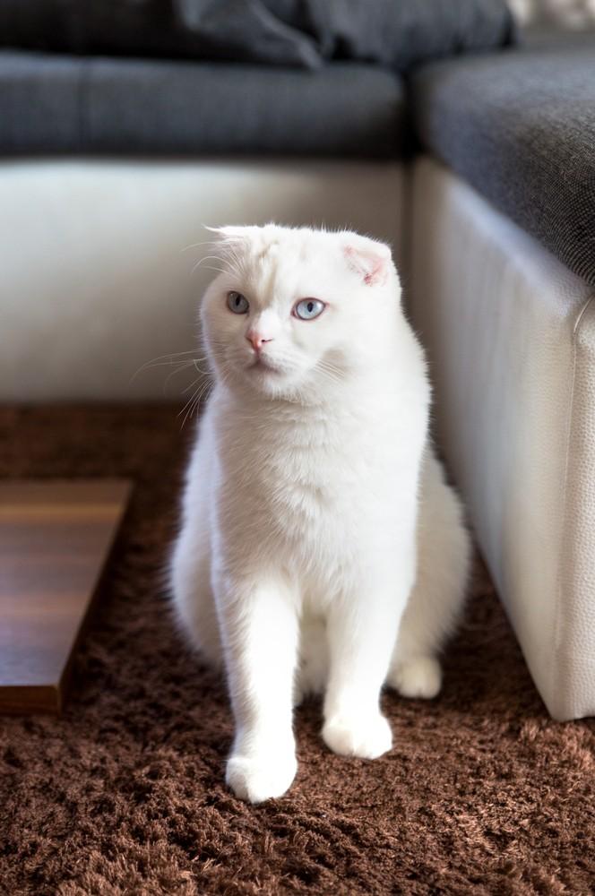 как вылечить кошку от простуды