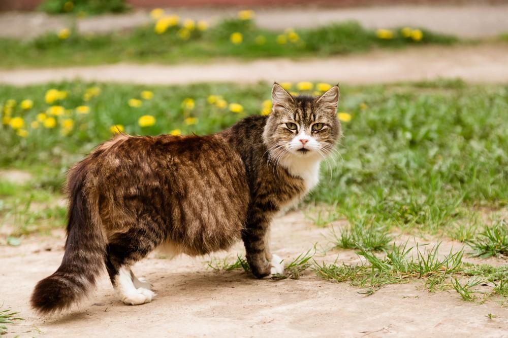 Как у беременной кошки выглядят соски
