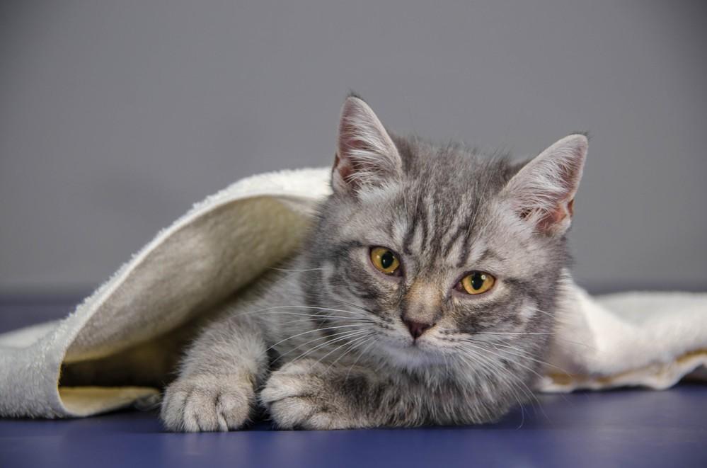 Признаки глистов у котенка 4 месяца