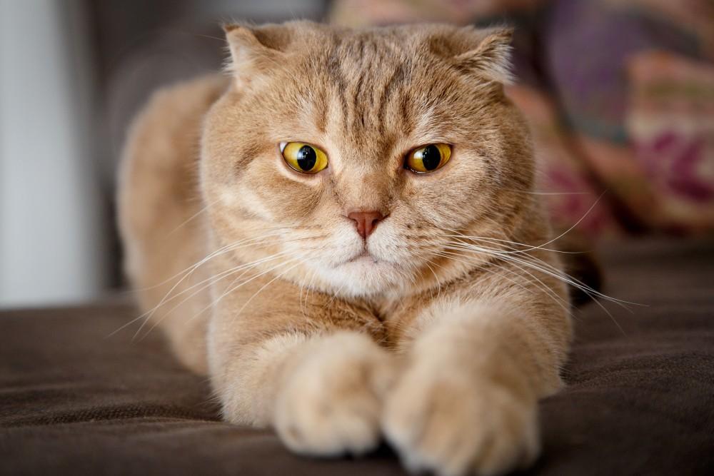 Народное средство у кота сексуальная озабоченность