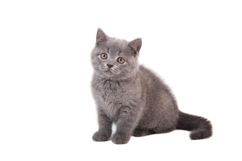 Что не любят кошки