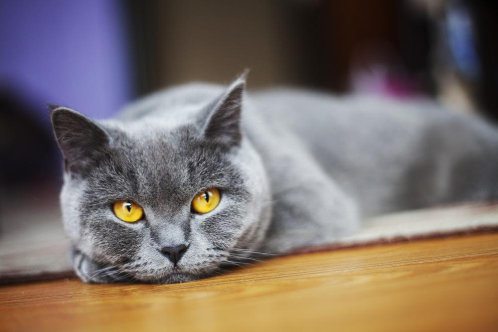 Как выглядят глисты у кошек фото