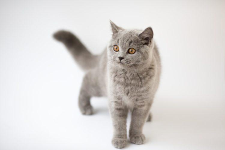 Натуральная пища кастрированному коту