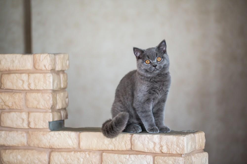 С какого возраста коты начинают гулять с кошками