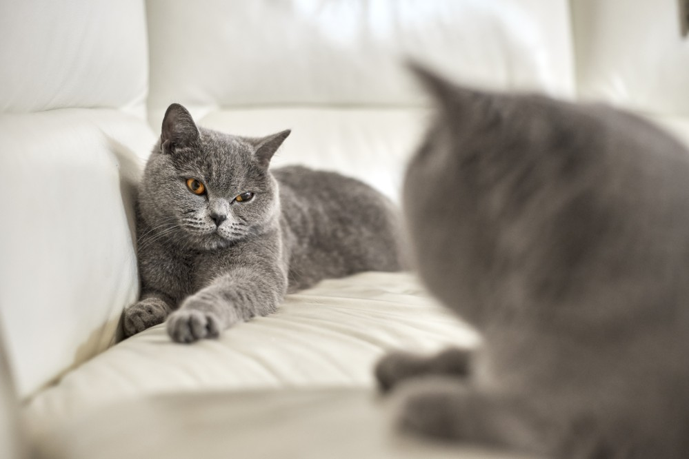 Кот всегда линяет