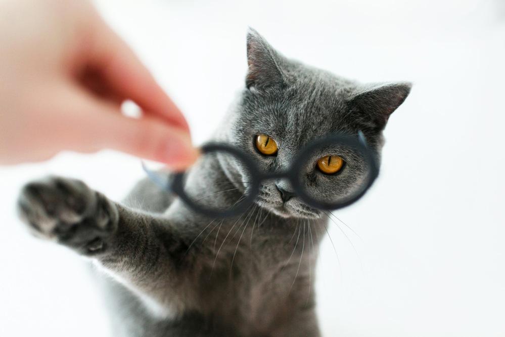 Питание кошки в домашних условиях