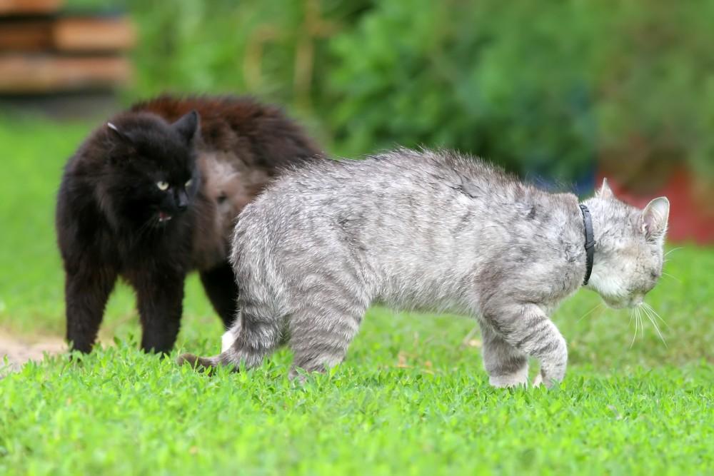 чтобы кошка не гуляла народные средства
