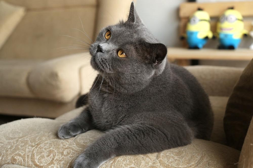 Кот ничего не ест с почечной недостаточностью