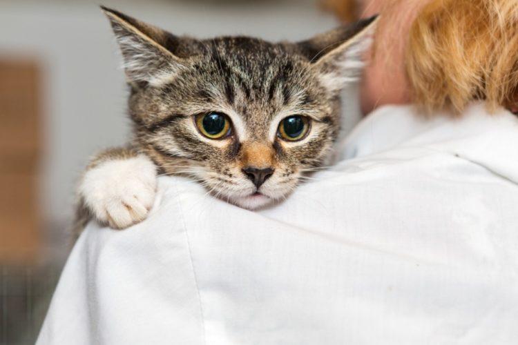 Пропадает нюх у кота