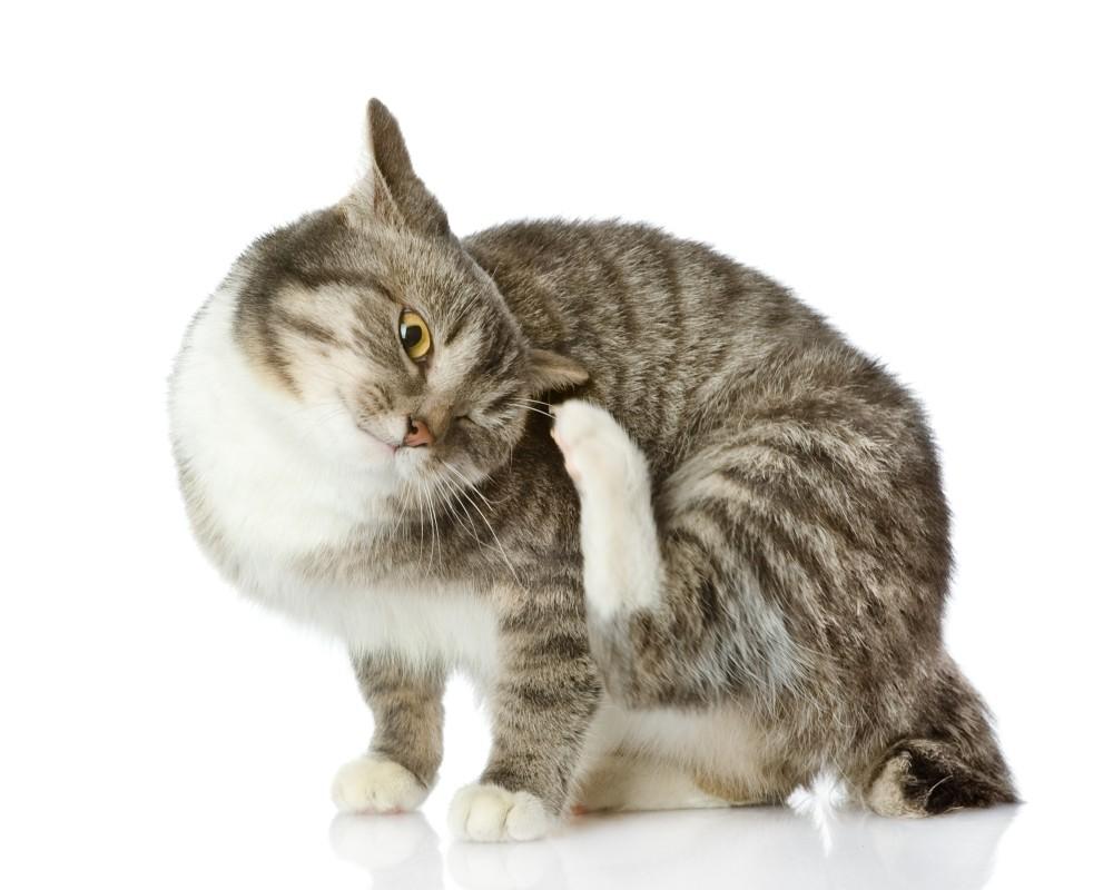 как кормить кастрированного кота