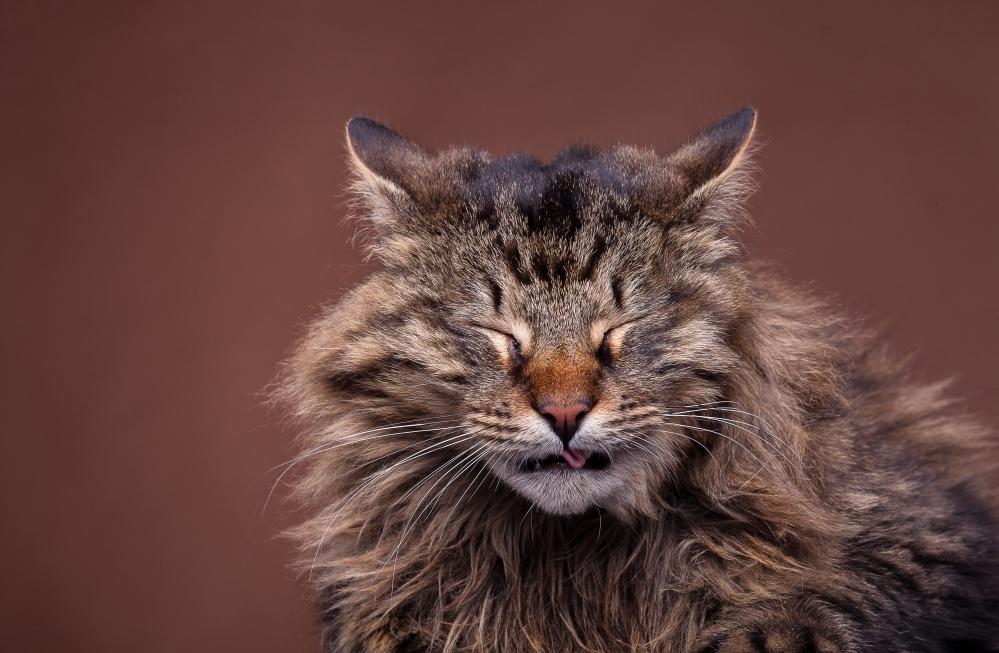Кот кашляет чихает
