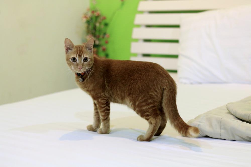 Кот гадит на кровать причины