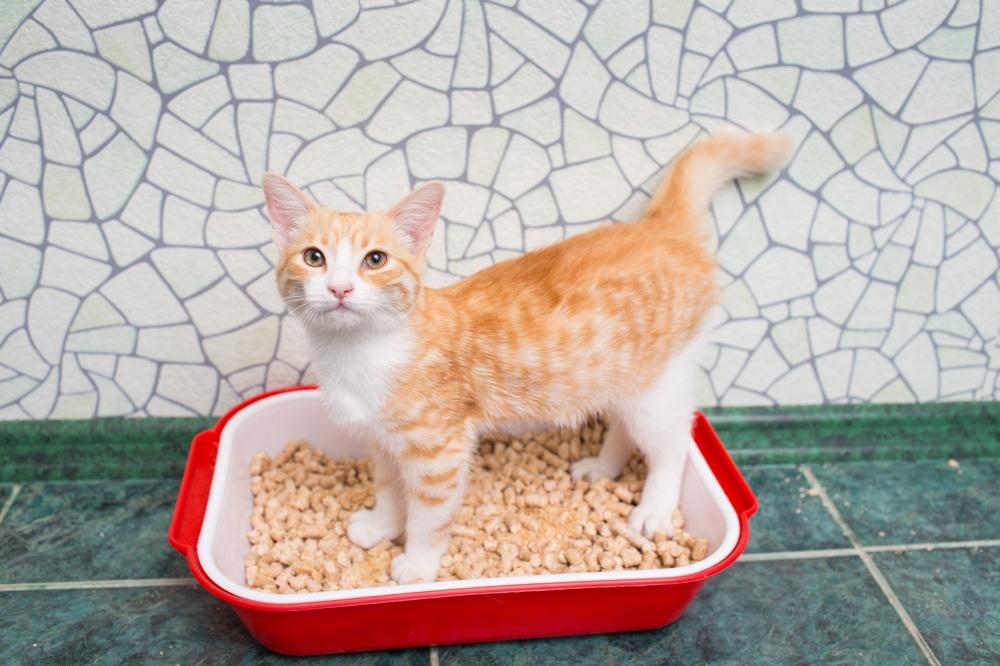 Cat constant urination