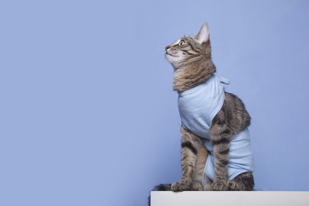 Лекарство для кошек чтобы не хотеть кота