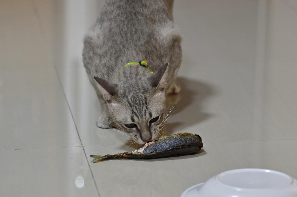 Чем кормить котенка 1 5 месяца