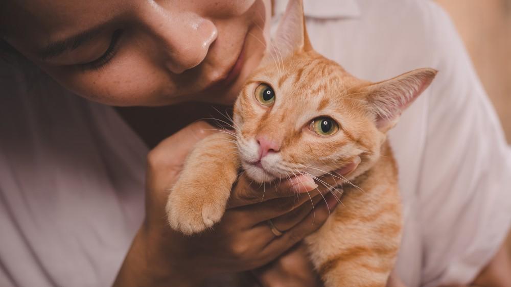 В каком возрасте кошки начинают хотеть котов