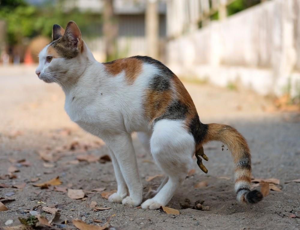 Кот не идет в туалет. Запор у кота, что делать, если кот не может сходить в туалет