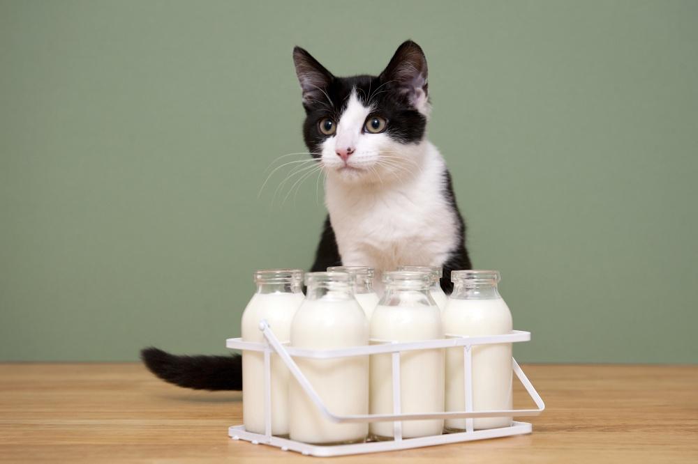 Кот лежит не ест не пьет не ходит