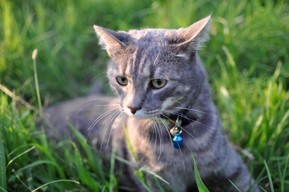 Как определить глистов у кошки?