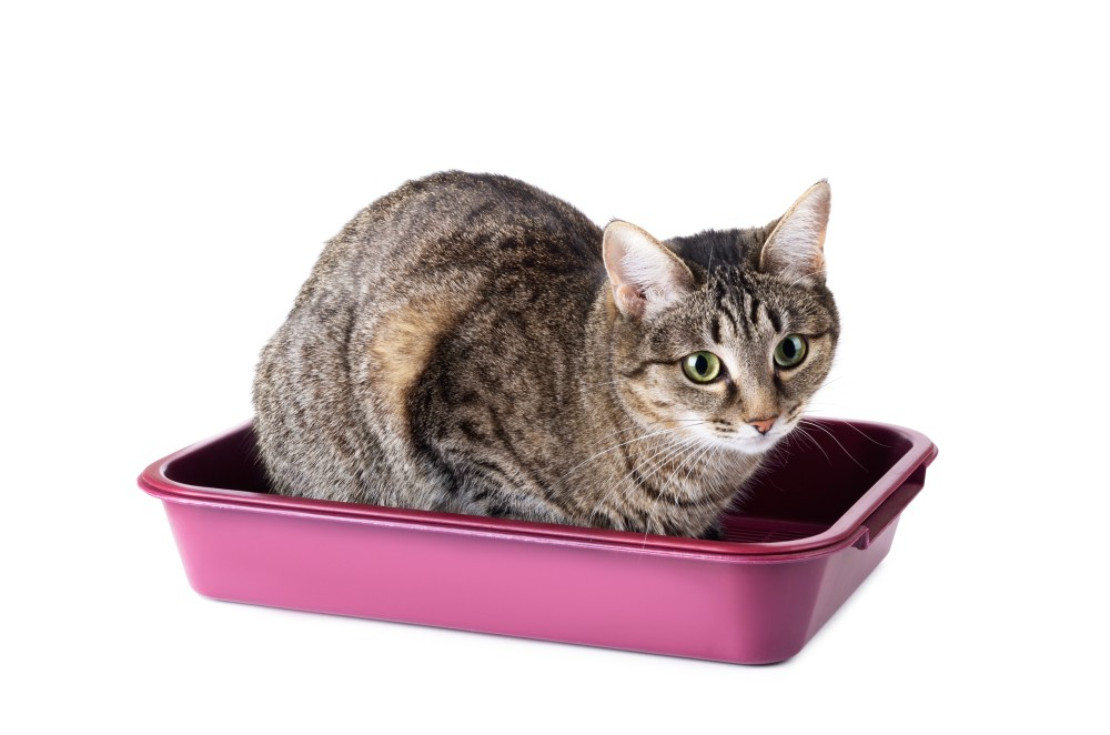Если у кота понос и температура