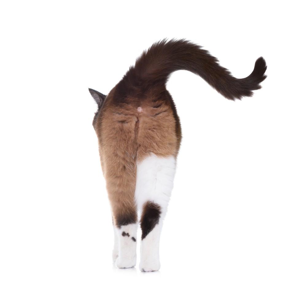 Кошка после родов не ходит в туалет по большому