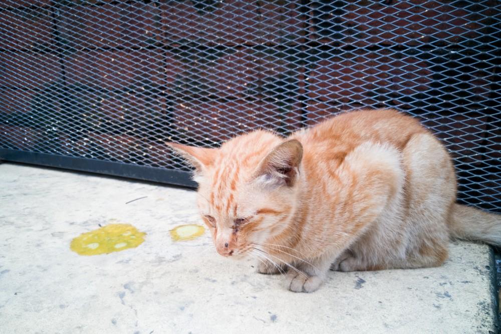 Маленького кота рвет