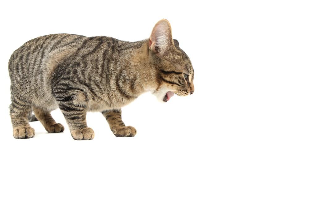 Что нужно делать когда кошку вырвало глистами