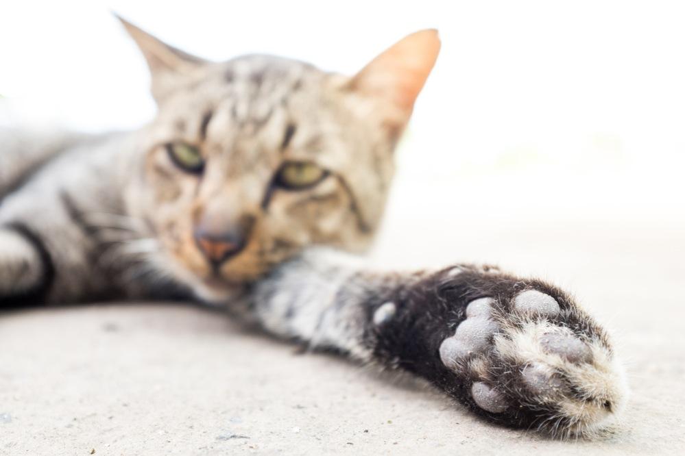 Чем чистить глаза котенку: советы ветеринаров 59