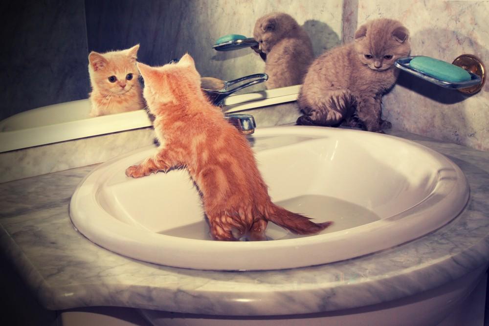Можно купать кота после прививки