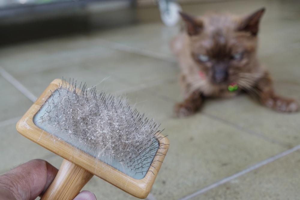Чем лечить кожный грибок у кошки