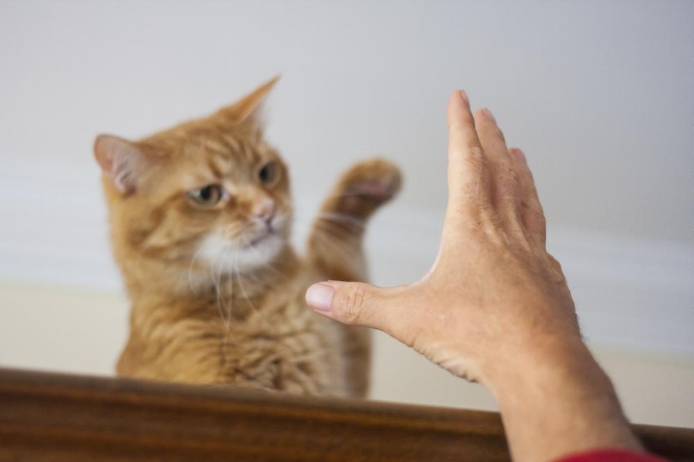 Кошачий лишай у человека и животного- признаки симптомы и лечение
