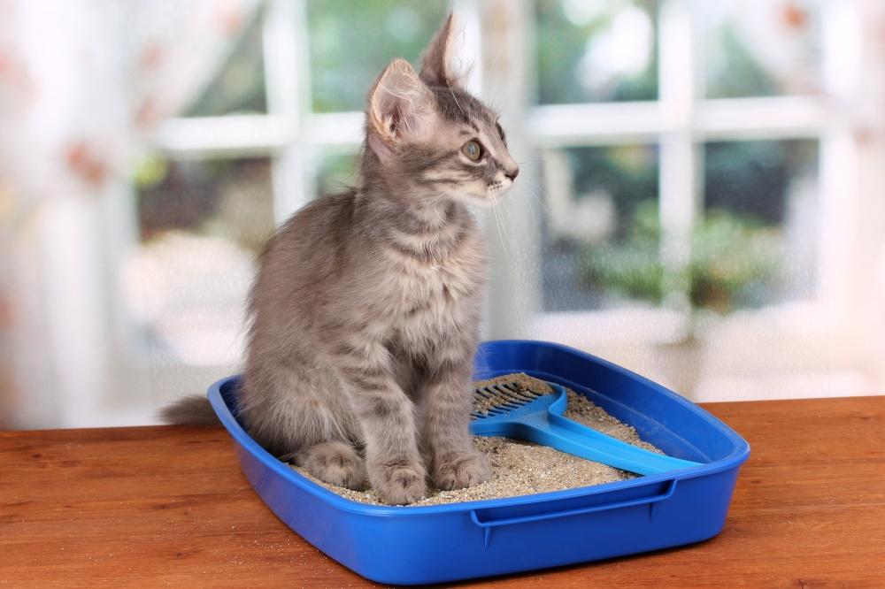 После операции кот не пьет воду