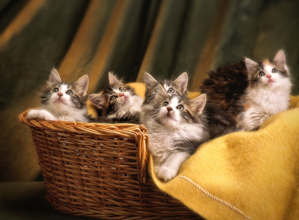 Чем кормить двухмесячного котенка